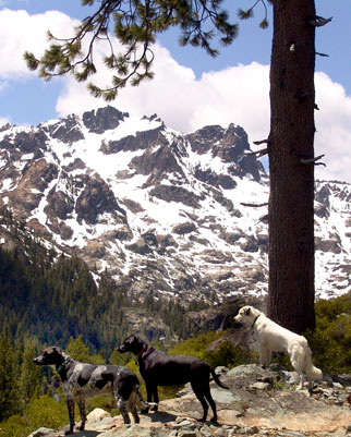 Our 3 dogs enjoying the view from a nearby
